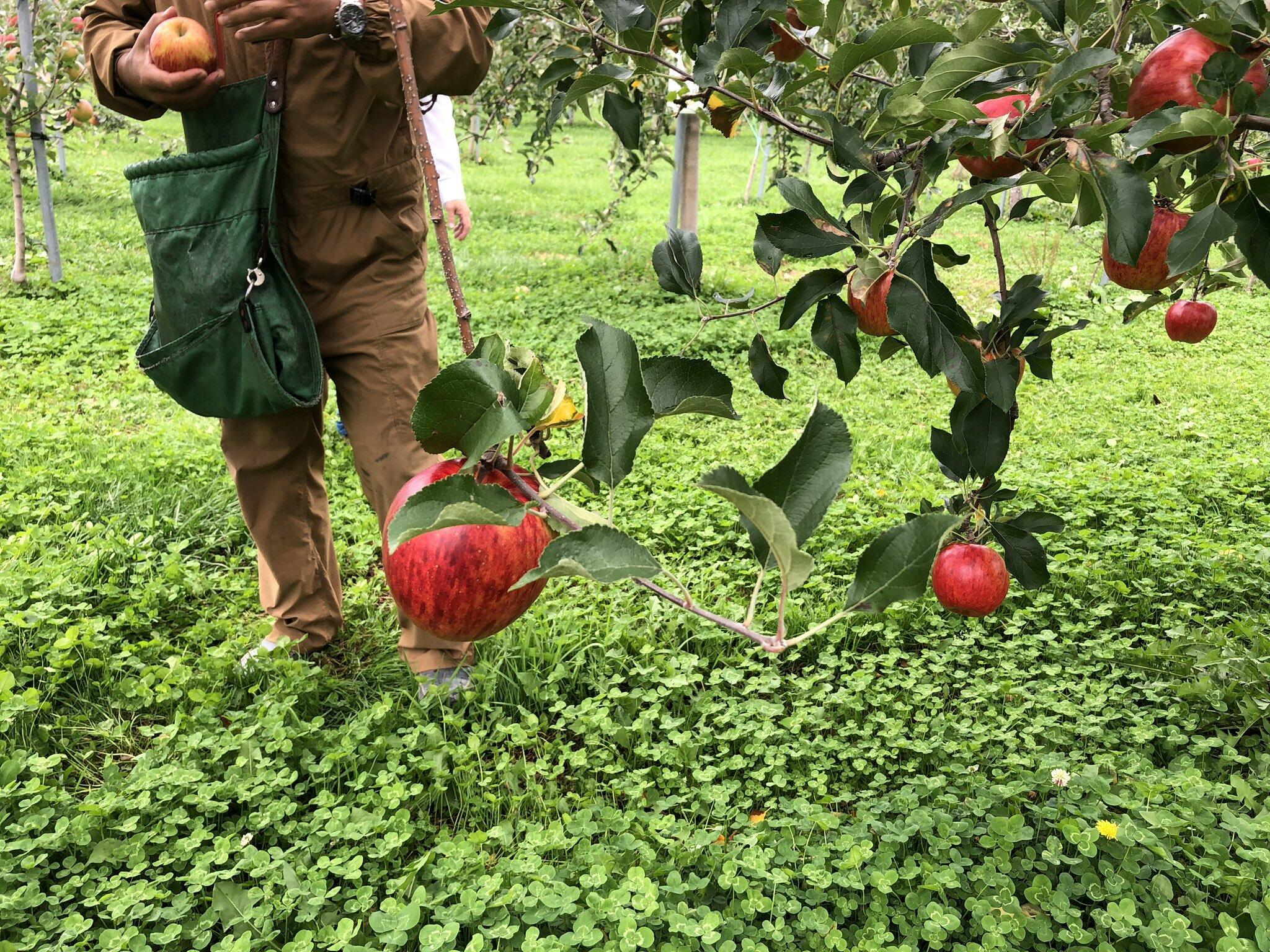 果樹園の取材